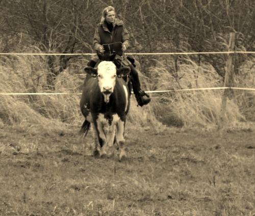 horsemanship v praxi